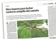 Otro insecto para luchar contra la avispilla del castaño